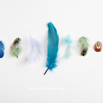 Blue Feathers 8x10 by MilesOfLight on Etsy