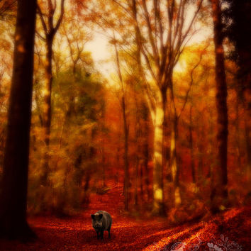 Enchanted Forest Photograph, Woodland, Autumn, Fall, Leaves, Magical, Trees, Red, Fairytale, Golden Light, Wild Boar - A Forest