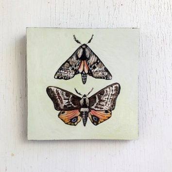SALE: One Eyed Sphinx Moth Painting. Original Art. Moth Painting. Mothers Day. Gift for Her. Entomologist. Naturalist.