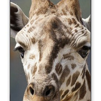 """Premium Direct Print Tall Exotic Giraffe Profile iphone 6 PLUS Quality Hard Snap On Case for iphone 6 PLUS/Apple iphone 6 PLUS 5.5"""" - AT&T Sprint Verizon - White Case PLUS Bonus RCGRafix The Best Iphone Business Productivity Apps Review Guide"""