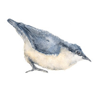 Watercolor painting, watercolor birds, original watercolor painting, watercolor animals, bird art, birds, nuthatch, blue 10X8