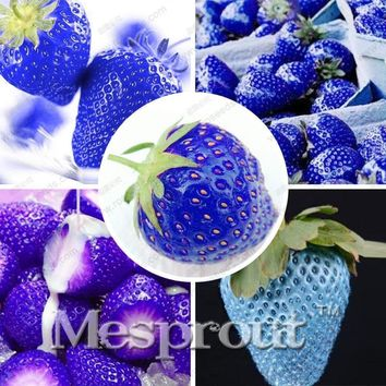 New Arrival Blue Climbing Strawberry tree Seeds,rare Fruit Seeds For Home & Garden bonsai seeds-500pcs,sent gift