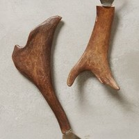 Horned Beauty Bottle Opener by Anthropologie in Brown Size: One Size House & Home