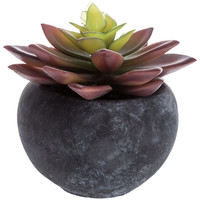 Succulent in Black Cement Pot | Hobby Lobby