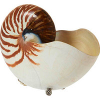 "8"" Nautilus w/ Sterling Silver, Brown, Coral, Barnacles, Shells & Starfish"