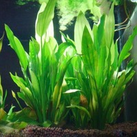Plastic Manmade Water Plant Grass Green 14cm Height for Aquarium