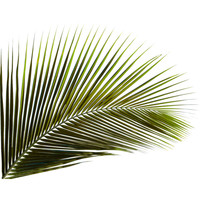 Palm Branch .png