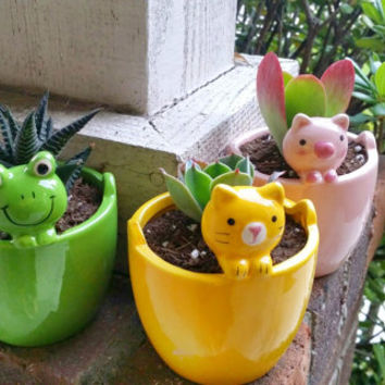 Cute Peekaboo CAT Planter with Succulent (PLANT INCLUDED!)