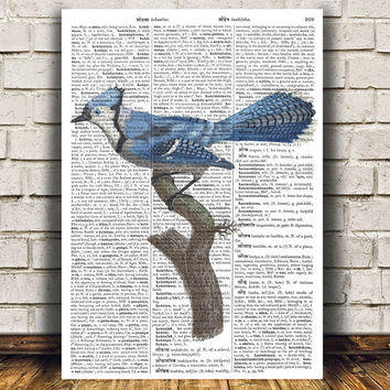 Dictionary print Blue jay art Bird poster Animal print RTA606
