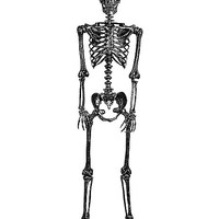 5 Ft Pose and Stay Black Skeleton - Decorations - Spirithalloween.com