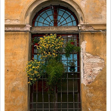 Antique Window with Yellow Flowers