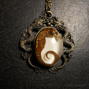 Double Dragon REAL Preserved Seahorse Specimen Cameo Necklace