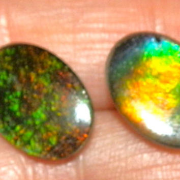 Gorgeous genuine Alberta Ammolite earrings. A must for any precious gem collector.