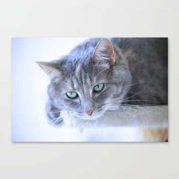Aqua Eyes Canvas Print by Theresa Campbell D'August Art