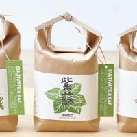 Cultivate & Eat - 4 kinds available (Shiso, Chili Pepper, Wasabina, Syungiku) Japanese Herb