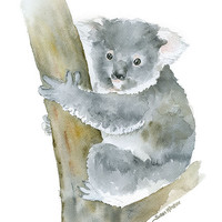 Koala Watercolor Painting - 8 x 10 - Giclee Print