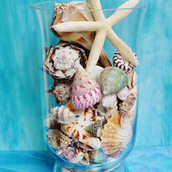 Coastal Living Decor ~ Hurricane Vase Full of Beautiful Sea Shells ~ Beach Living ~ Beach Wedding Centerpiece ~ Sand Filler Optional
