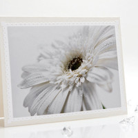 Pastel white herbera daisy photo greeting note card for birthday, wedding, anniversary and etc.