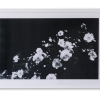 Night Flowers - large wall print