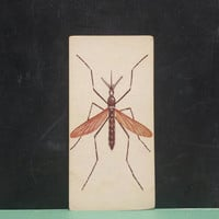 Vintage Mosquito Insect Flash Card Bug Color Illustration Paper Ephemera Art Decor Nature Collage Crafts Supply