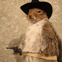 #6901 Cowboy Grey Squirrel Novelty Taxidermy Mount |Red|Fox|Chipmunk|Gift|