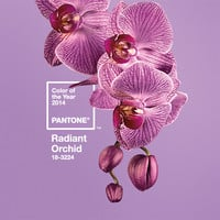 PANTONE Color of the Year 2014 Radiant Orchid 18-3224