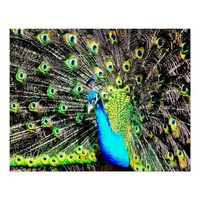 25 X 20 COLORFUL PEACOCK PREMIUM CANVAS POSTER