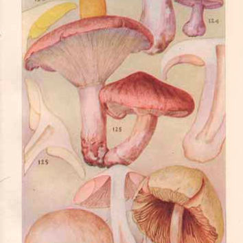 Vintage Botany Print, 1928 Mushroom Art Illustration, Wall Decor, Plate XVI