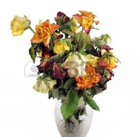 A Bouquet Of Dried Roses In A Clear Glass Vase. Royalty Free Photos, Pictures, Images and Stock Photography