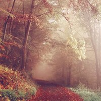 Creepy Foggy Autumn Walkway Printed Backdrop - 6793