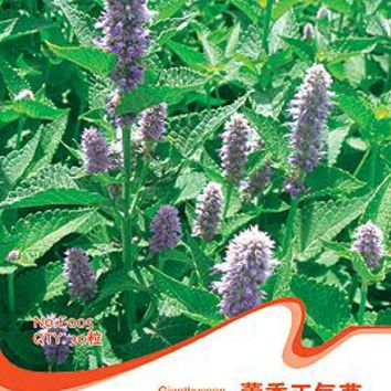 (Mix minimum order $5)1 original pack 30 pcs Agastache Rugosa Seeds Giant Hyssop Chinese Medical Plant Free Shipping