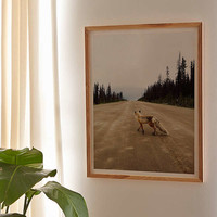 Kevin Russ Road Fox Art Print | Urban Outfitters