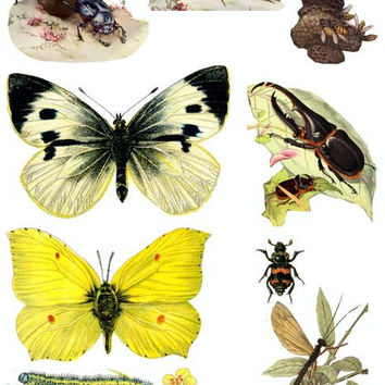 butterfly caterpillar beetles bugs insects vintage clip art collage sheet digital dowload collage printable