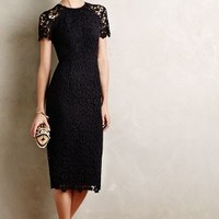 Vanda Lace Sheath
