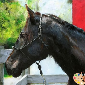 Friesian Horse  Portrait 495