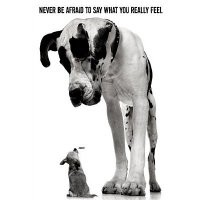 Never Be Afraid To Say What You Really Feel Poster