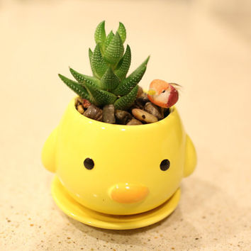 Animal Duck Pot with Succulent Plant