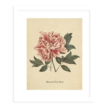 BOTANICAL VINTAGE EIGHT Framed Giclee Print With Mat By Terri Ellis