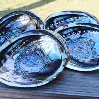 ABALONE SHELL for Smudging - Large Sea Shell Smudge Bowl