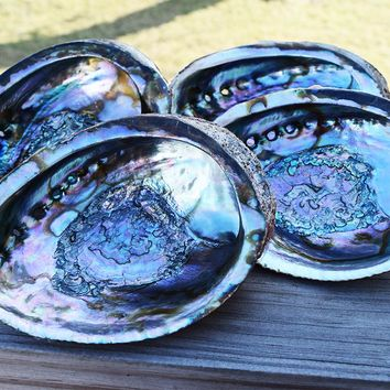 ABALONE SHELL Large Premium Colorful Sea Shell - Use for Smudging with White Sage