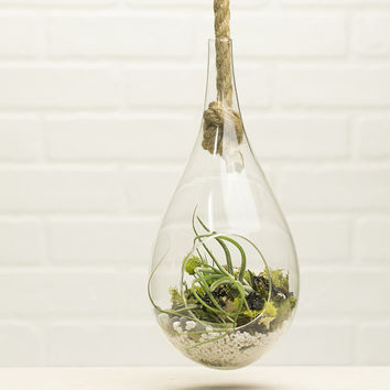 Teardrop Hanging Terrarium Kit