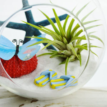 Butterfly Terrarium Glass Globe Hanging Terrarium Kit with Tillandsia Air Plant - Beach - Home Decor - Blue Starfish - Flip Flops -Gift Idea