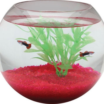 Glass Fish Bowl 1.5 Gallon