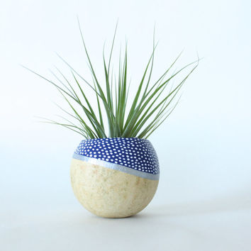 Air Plant Planter with Air Plant -  Natural, Blue, Silver & White