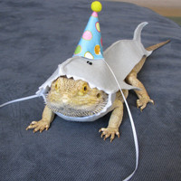 Handmade Felt Bearded Dragon Great White Shark Birthday Hat Costume
