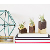 Air Plant Holder - Set of Three Gold Leaf