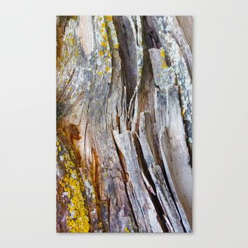 Relic of the Forest Canvas Print by Heidi Haakenson