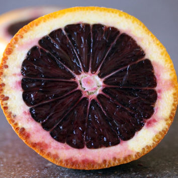 MORO BLOOD orange Tree Seeds / 10+ fresh seeds