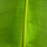 Green Leaf Photograph by Anja Siller - Green Leaf Fine Art Prints and Posters for Sale