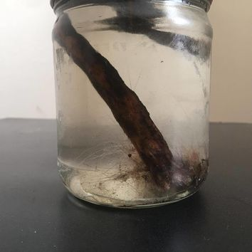 Possum Tail (Wet Specimen)
